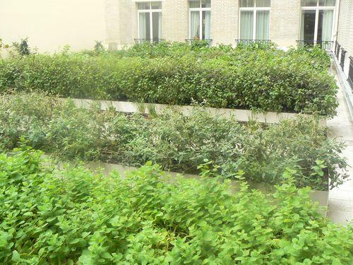 Jardin aromatique